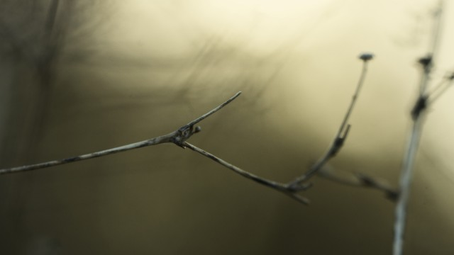 Day Eighty One, 'NoWhere, MN'. Abstract twigs.