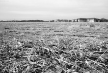 Day Fifty Five, 'NoWhere, MN'. Cornfield / Subdivision / Sprawl.