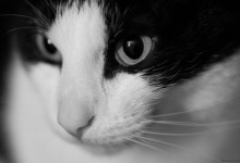 Day Seventy Three, 'NoWhere, MN'. Gustav the cat in B&W.