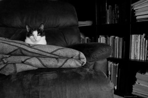 Day Sixty Six, 'NoWhere, MN'. Tiny Gustav using as many comfy things as he possibly can. And yes, I've finally given in and used a cat picture...