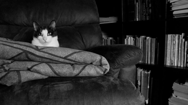Day Sixty Six, 'NoWhere, MN'. Tiny Gustav using as many comfy things as he possibly can.