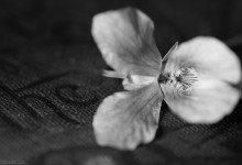 Day Eighty Eight, 'NoWhere, MN'. Tiny flower in B&W, book.