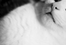 Say Eighty Seven, 'NoWhere, MN'. Cat nose / mouth.
